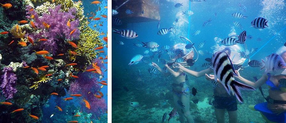 泰國芭堤雅格蘭島水上活動海底漫步