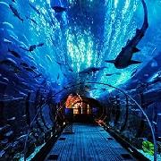 2019新加坡聖淘沙S.E.A海洋水族館門票(掃碼入園)