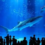 沖繩琉球村+美麗海水族館入場券(組合優惠電子票)