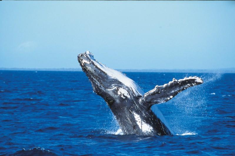 史蒂芬港 斯蒂芬斯港 斯蒂文斯港 史蒂芬港滑沙 史蒂芬港鯨魚 史蒂芬港遊船
