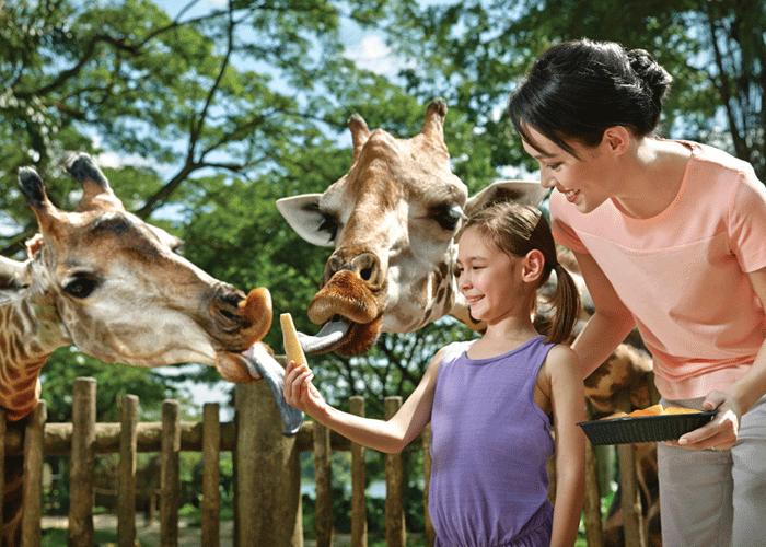 【1-25秒殺】新加坡Singapore Zoo日間動物園門票(含遊覽車)
