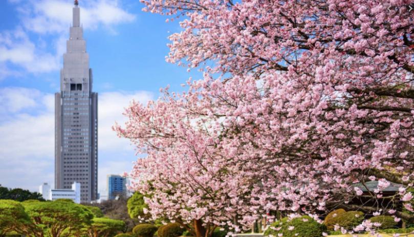 東京櫻花季節2020 最佳賞櫻聖地