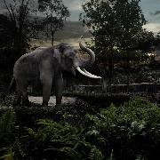 新加坡河川生態園+夜間野生動物園一日遊(含英文導遊+接送)