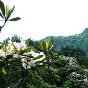 麗水市箬寮原始林景區