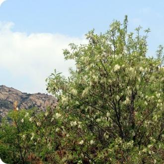 茶山風景區